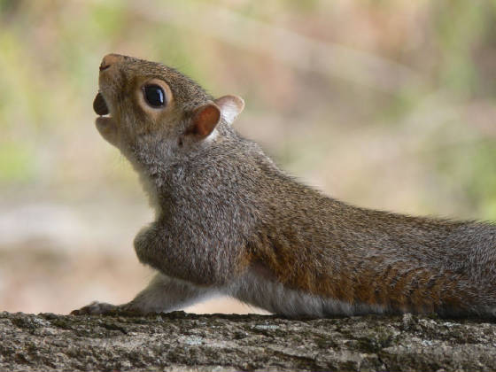 YogaSquirrel.jpg